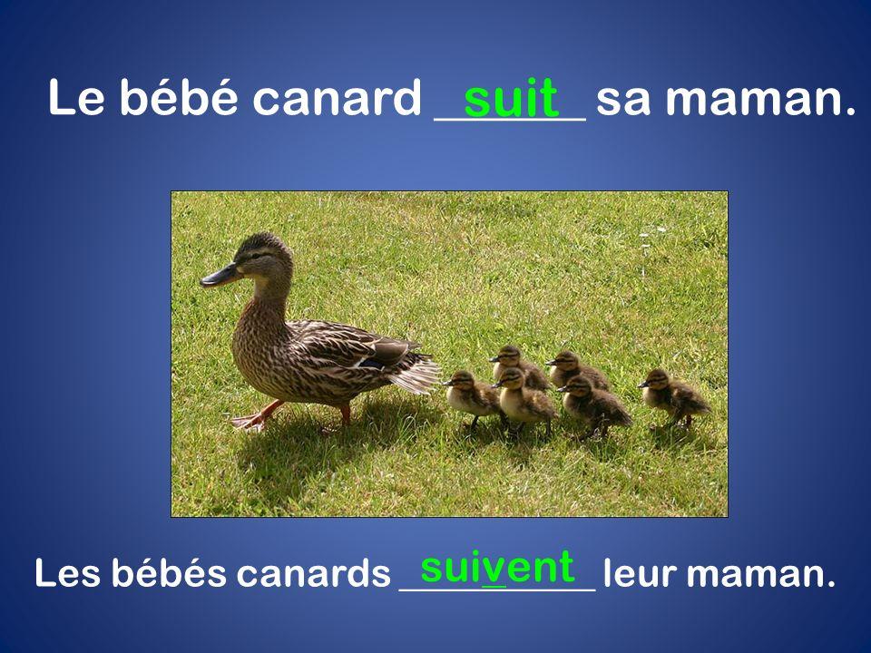 suit Le bébé canard ______ sa maman. suivent