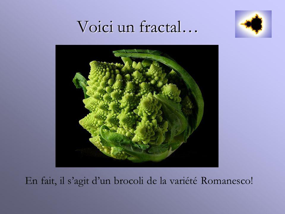 Voici un fractal… En fait, il s'agit d'un brocoli de la variété Romanesco!