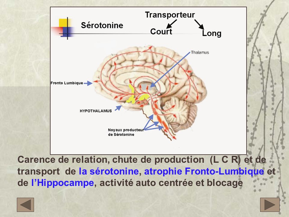 Carence de relation, chute de production (L C R) et de transport de la sérotonine, atrophie Fronto-Lumbique et de l'Hippocampe, activité auto centrée et blocage