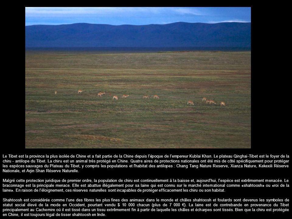 Le Tibet est la province la plus isolée de Chine et a fait partie de la Chine depuis l époque de l empereur Kublai Khan. Le plateau Qinghai-Tibet est le foyer de la chiru - antilope du Tibet. La chiru est un animal très protégé en Chine. Quatre aires de protections nationales ont été mis de côté spécifiquement pour protéger les espèces sauvages du Plateau du Tibet, y compris les populations et l habitat des antilopes : Chang Tang Nature Reserve, Xianza Nature, Kekexili Réserve Nationale, et Arjin Shan Réserve Naturelle.