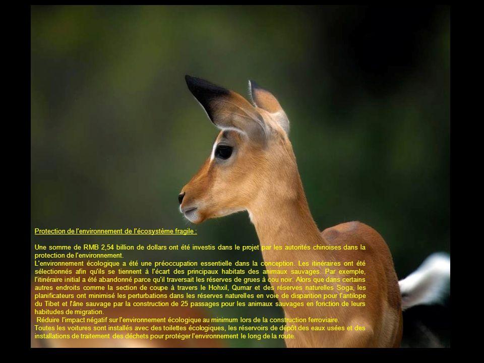 Protection de l environnement de l écosystème fragile :