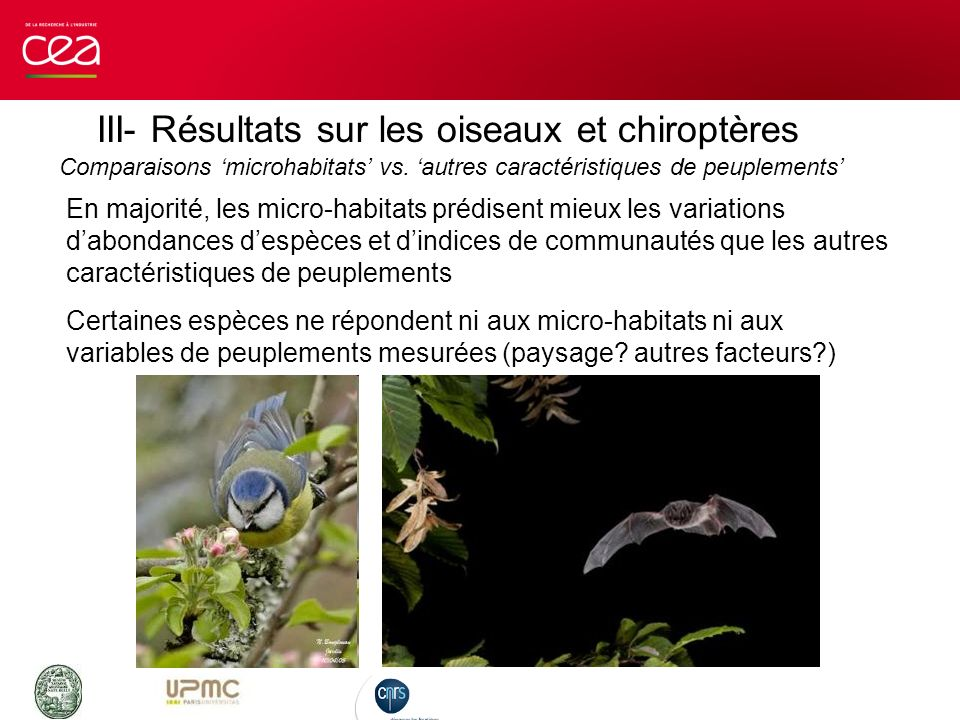 III- Résultats sur les oiseaux et chiroptères