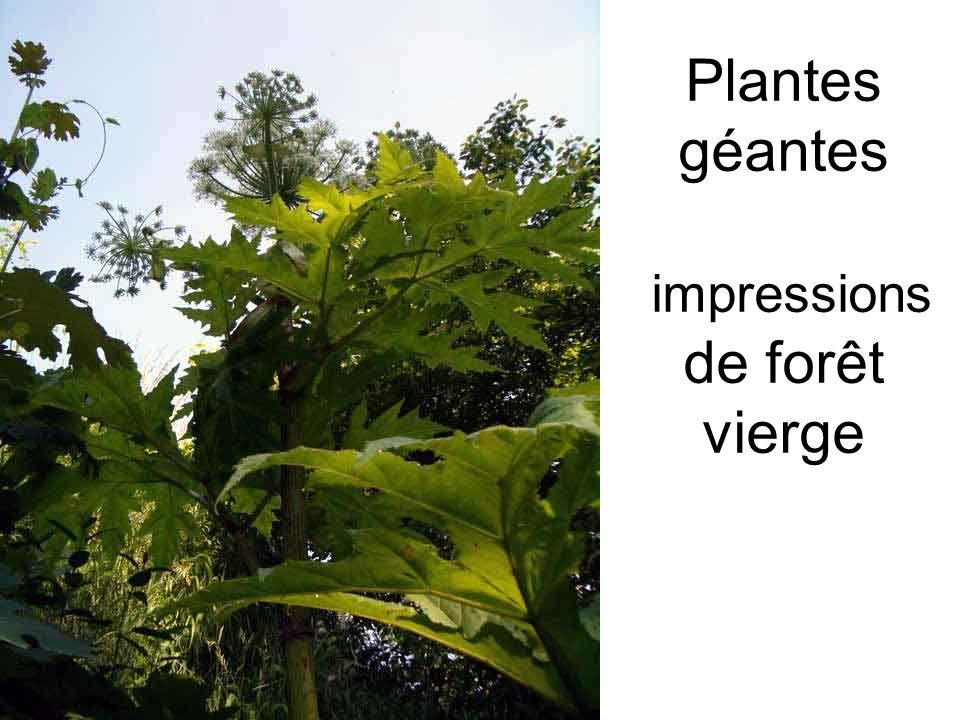 Plantes géantes impressions de forêt vierge