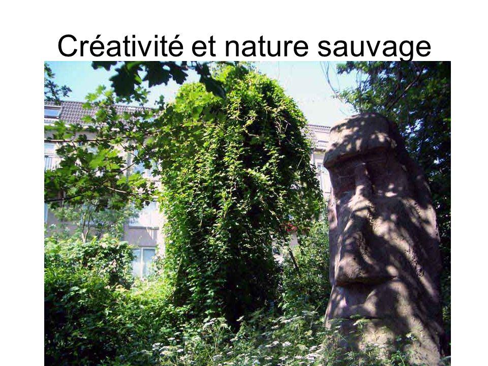 Créativité et nature sauvage