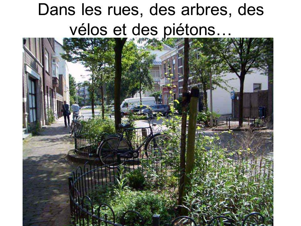 Dans les rues, des arbres, des vélos et des piétons…
