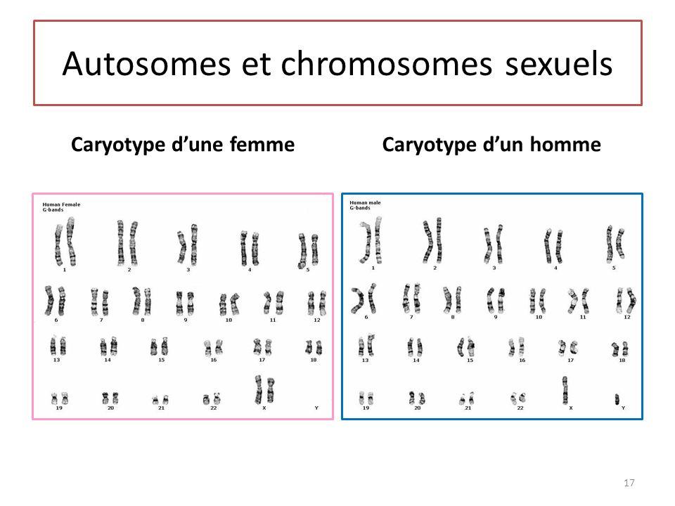 Autosomes et chromosomes sexuels