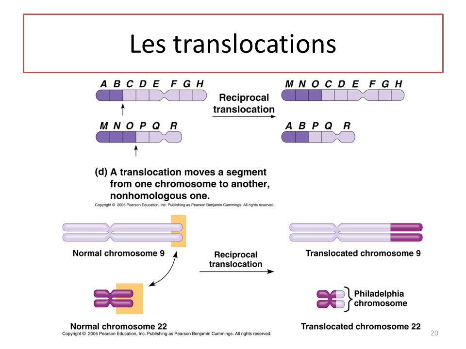 Les translocations