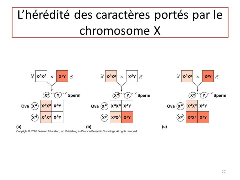 L'hérédité des caractères portés par le chromosome X