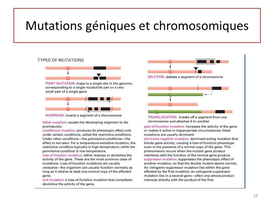 Mutations géniques et chromosomiques