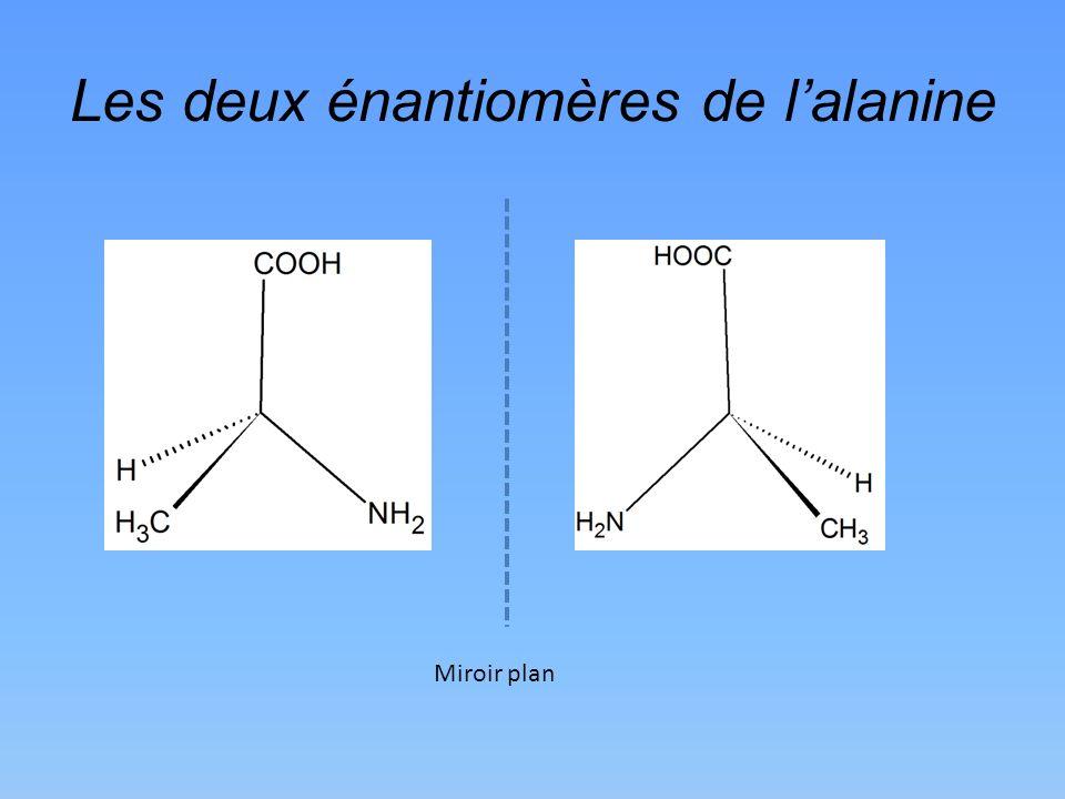 Les deux énantiomères de l'alanine