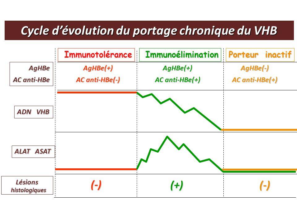 Cycle d'évolution du portage chronique du VHB
