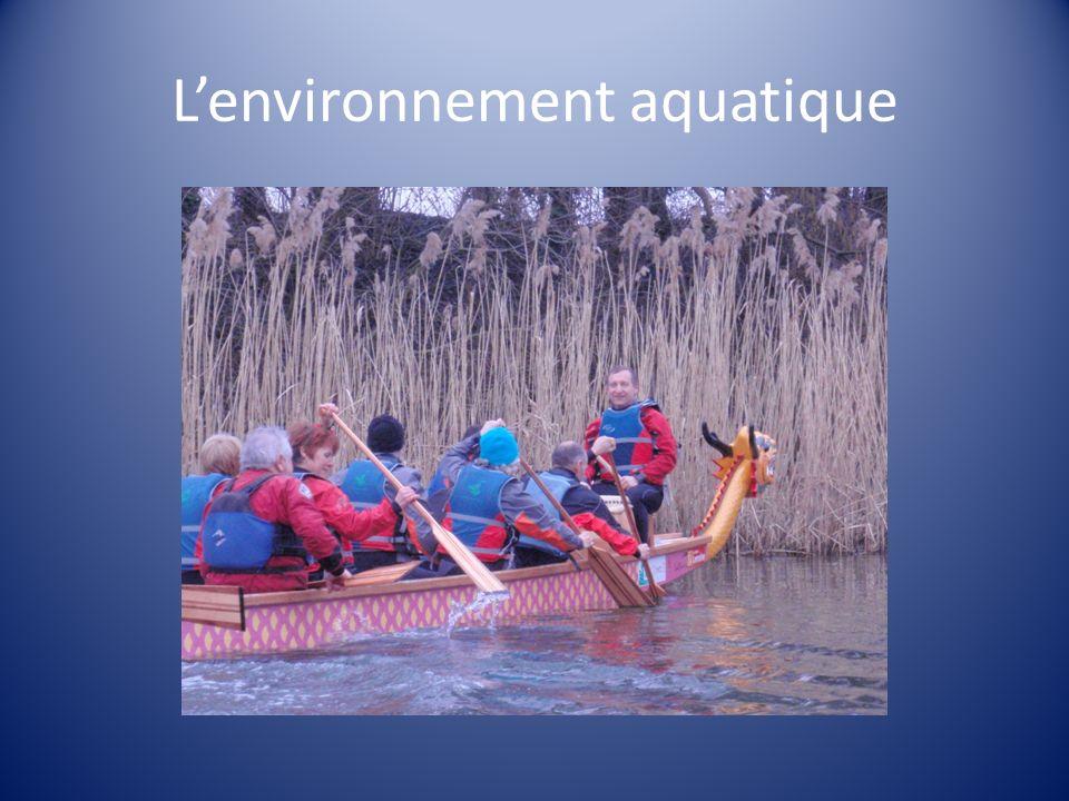 L'environnement aquatique