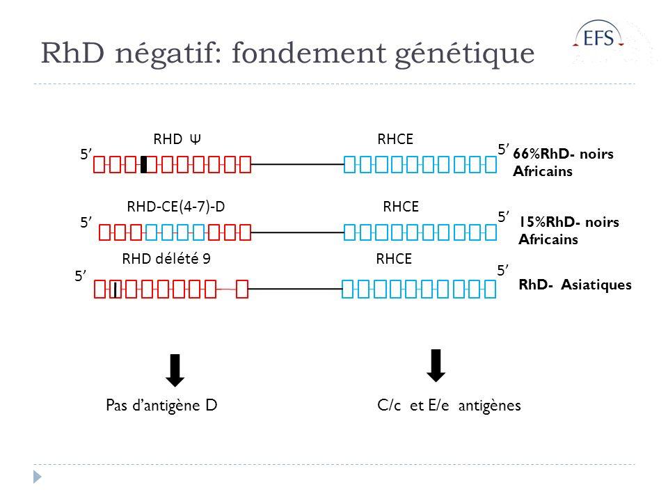 RhD négatif: fondement génétique