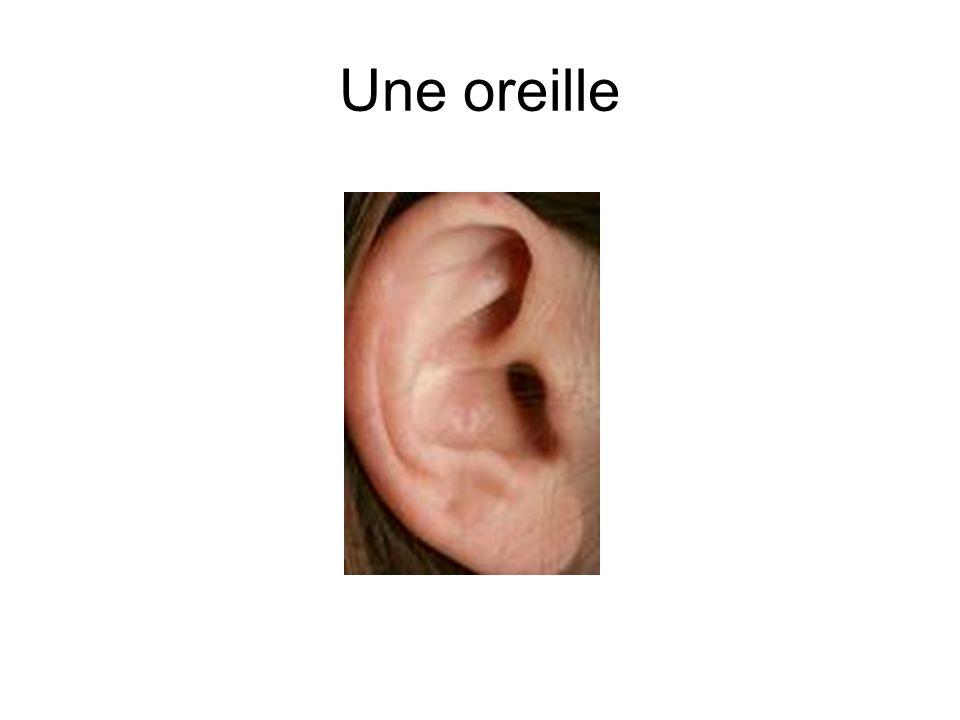 Une oreille