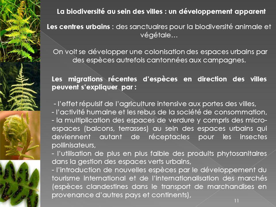La biodiversité au sein des villes : un développement apparent