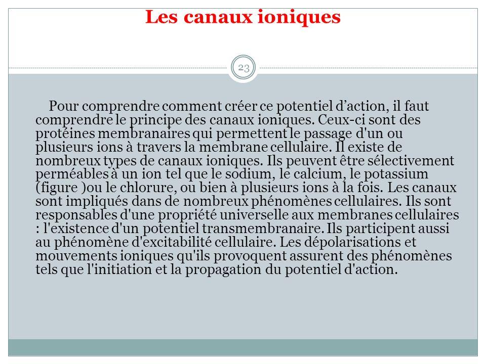 Les canaux ioniques