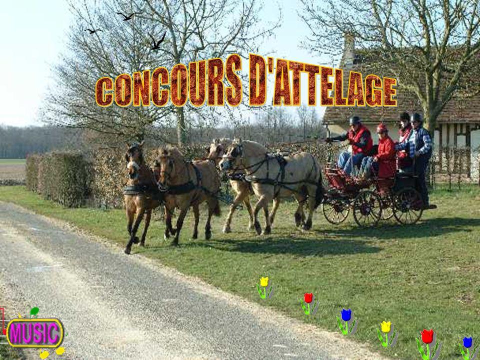 CONCOURS D ATTELAGE