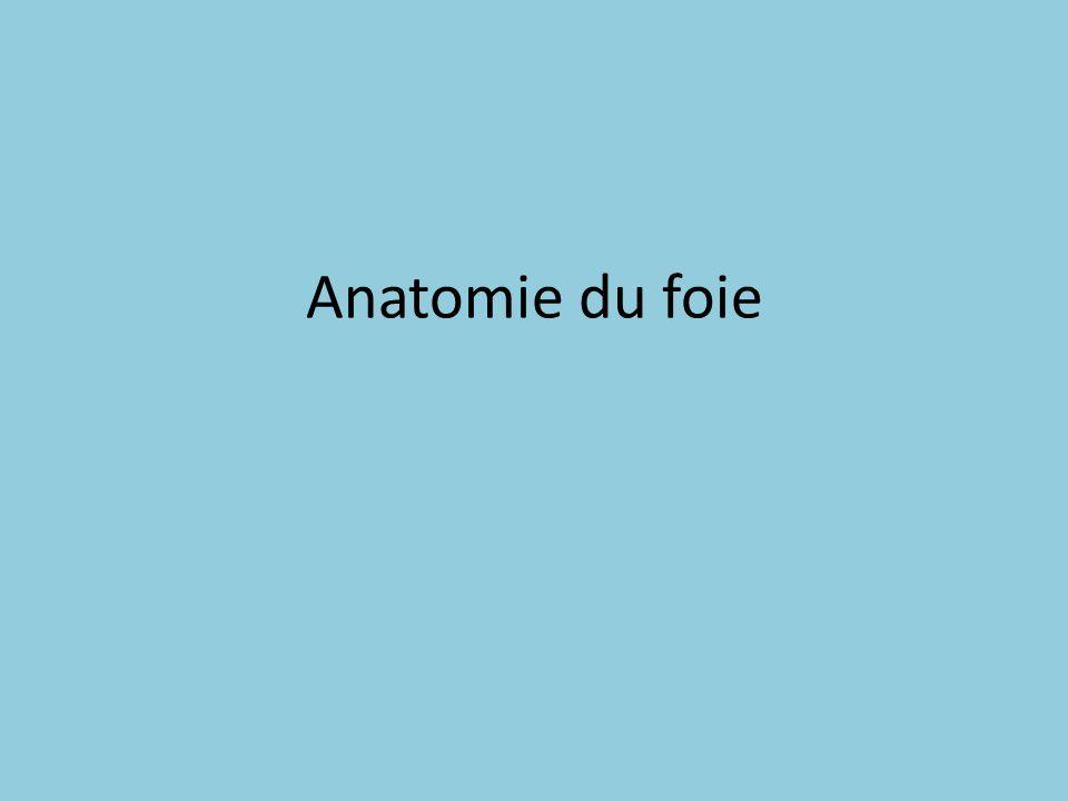 Anatomie du foie
