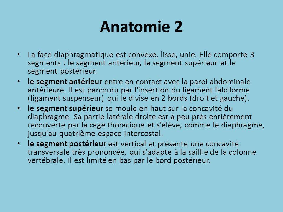 Anatomie 2