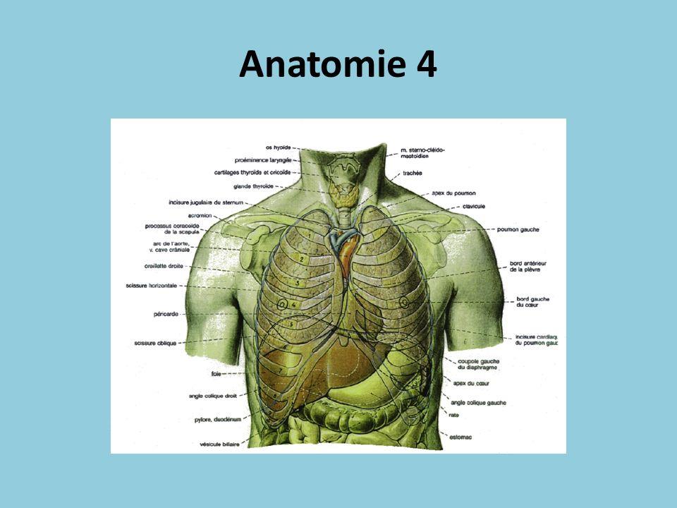 Anatomie 4