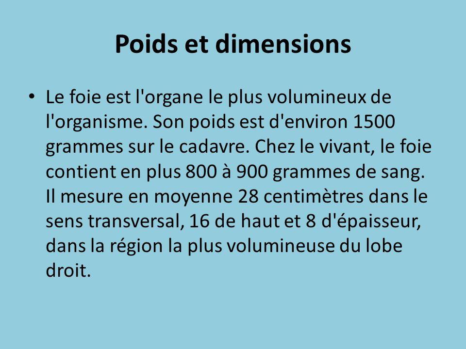 Poids et dimensions