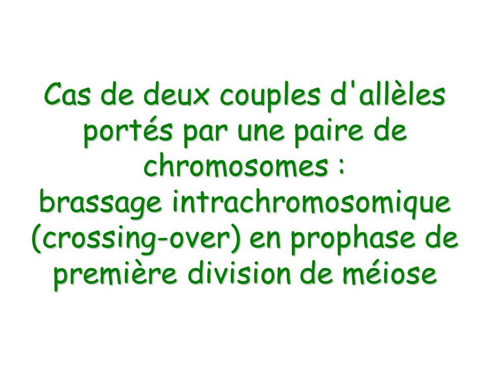 Cas de deux couples d allèles portés par une paire de chromosomes :