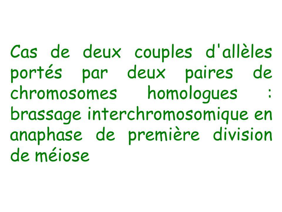 Cas de deux couples d allèles portés par deux paires de chromosomes homologues : brassage interchromosomique en anaphase de première division de méiose