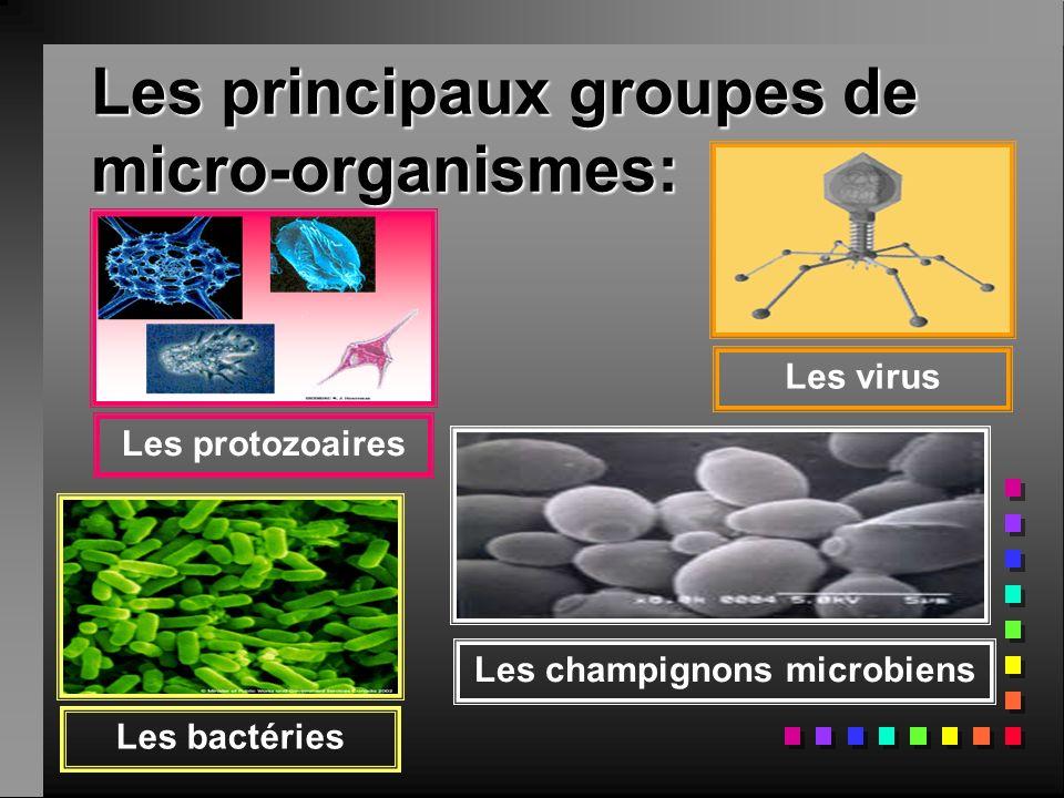 Les principaux groupes de micro-organismes: