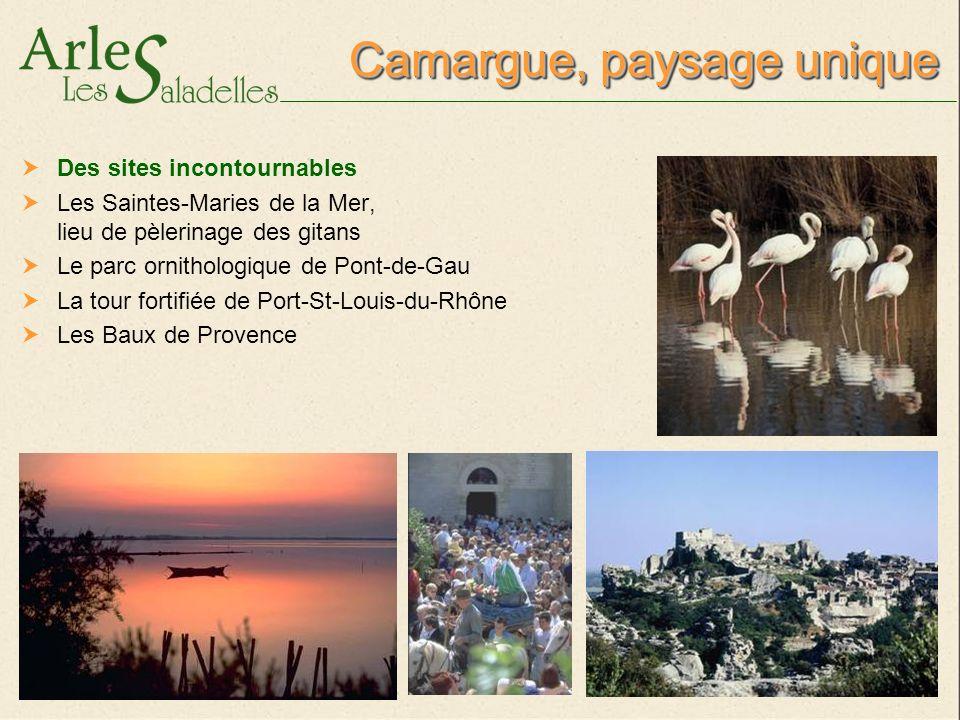 Camargue, paysage unique