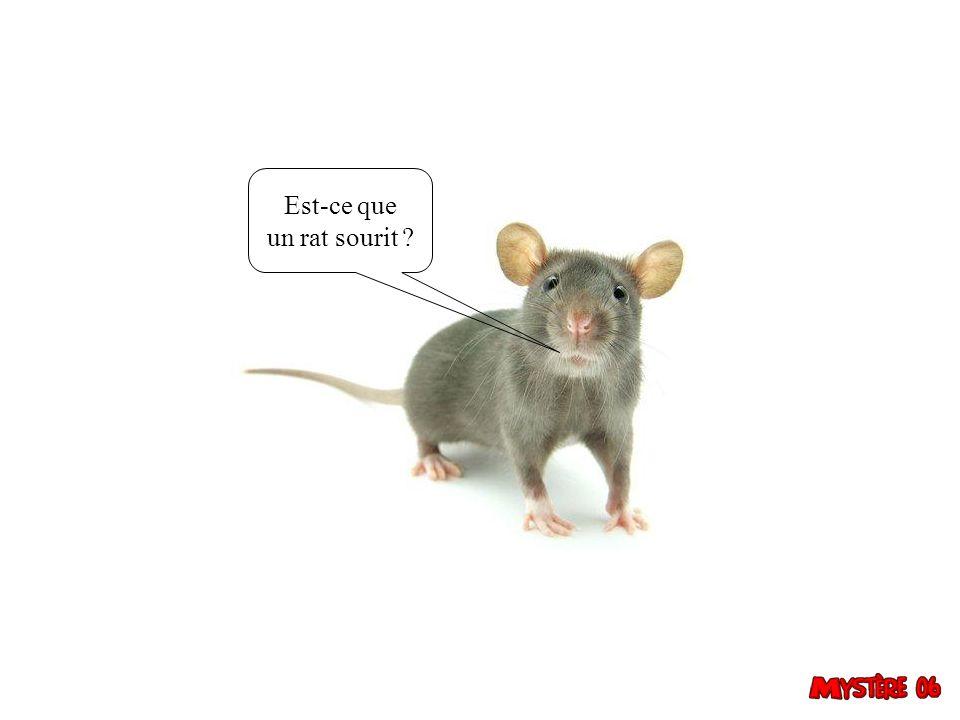 Est-ce que un rat sourit 21