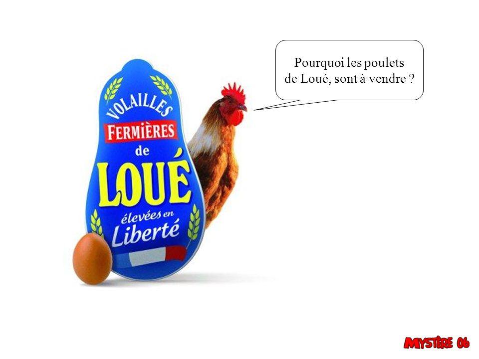 Pourquoi les poulets de Loué, sont à vendre 9