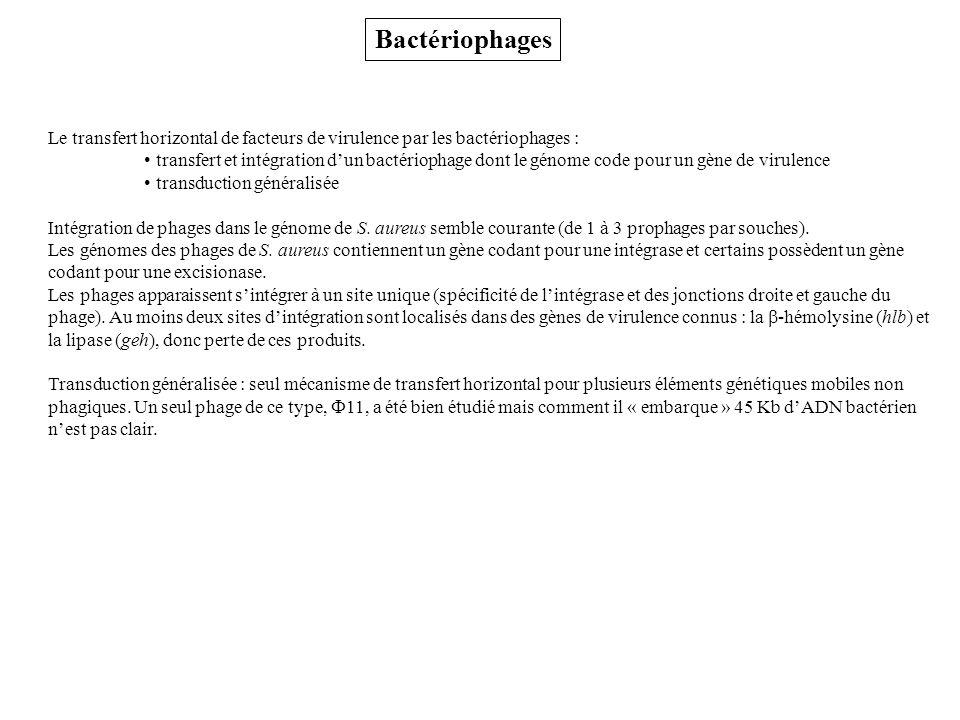 Bactériophages Le transfert horizontal de facteurs de virulence par les bactériophages :