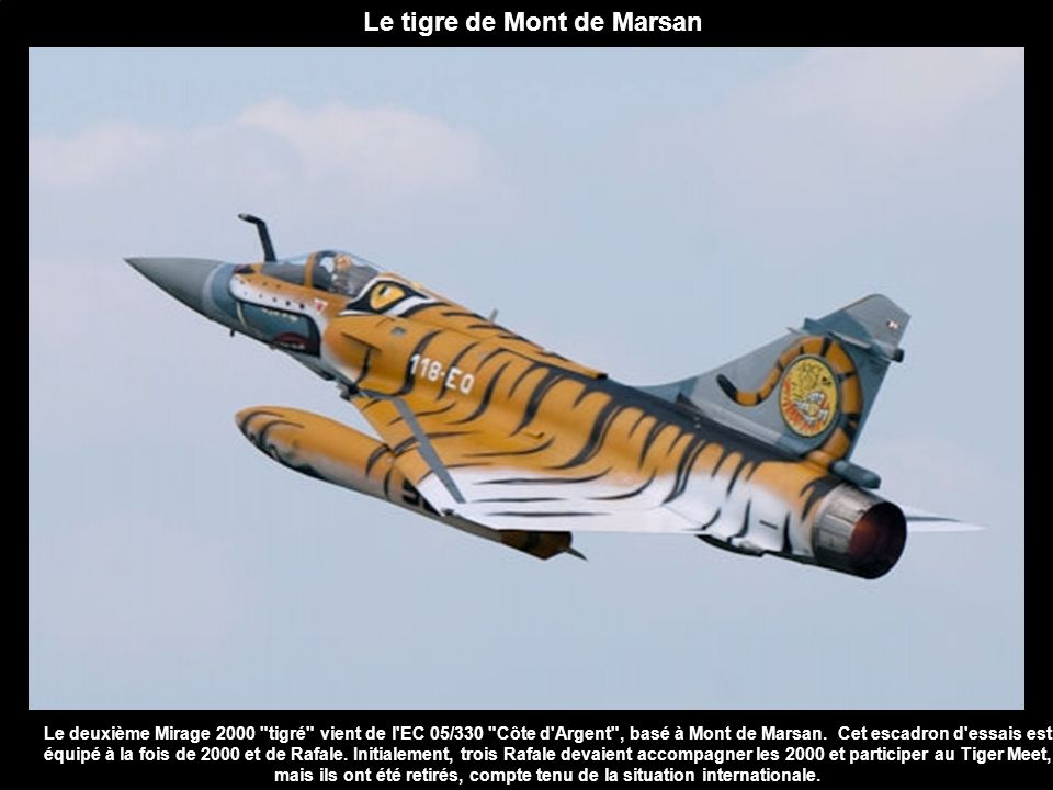 Le tigre de Mont de Marsan