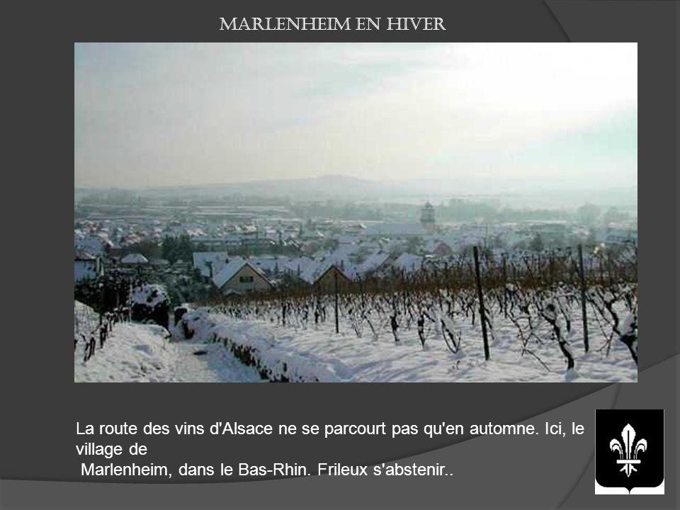 Marlenheim en hiver La route des vins d Alsace ne se parcourt pas qu en automne. Ici, le village de.