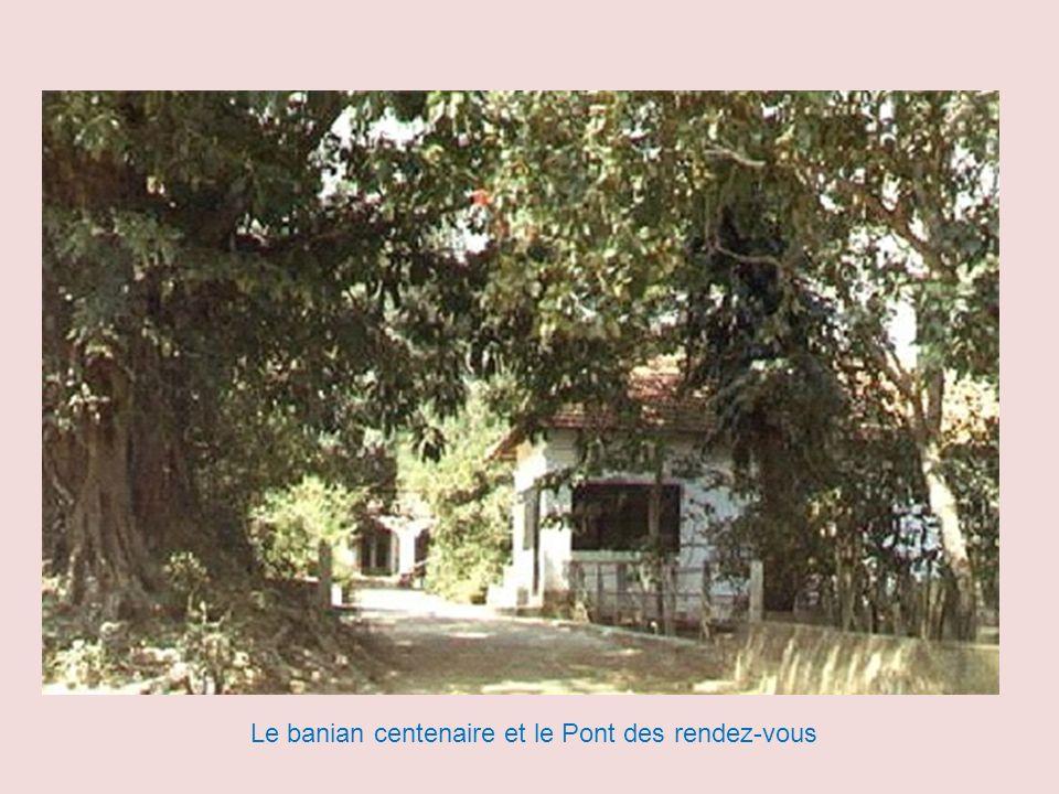 Le banian centenaire et le Pont des rendez-vous