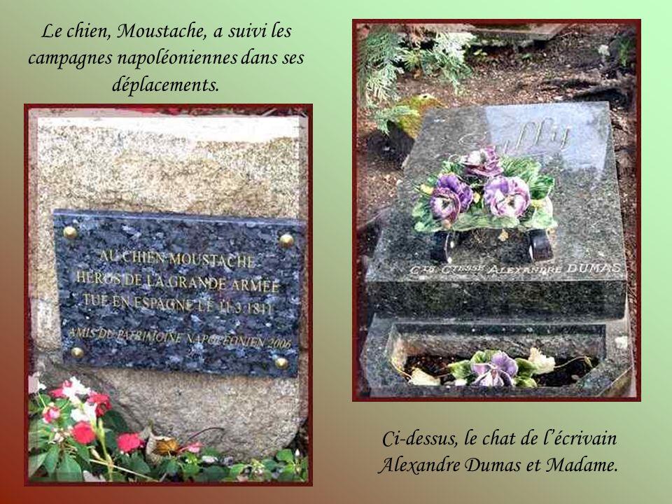 Ci-dessus, le chat de l'écrivain Alexandre Dumas et Madame.