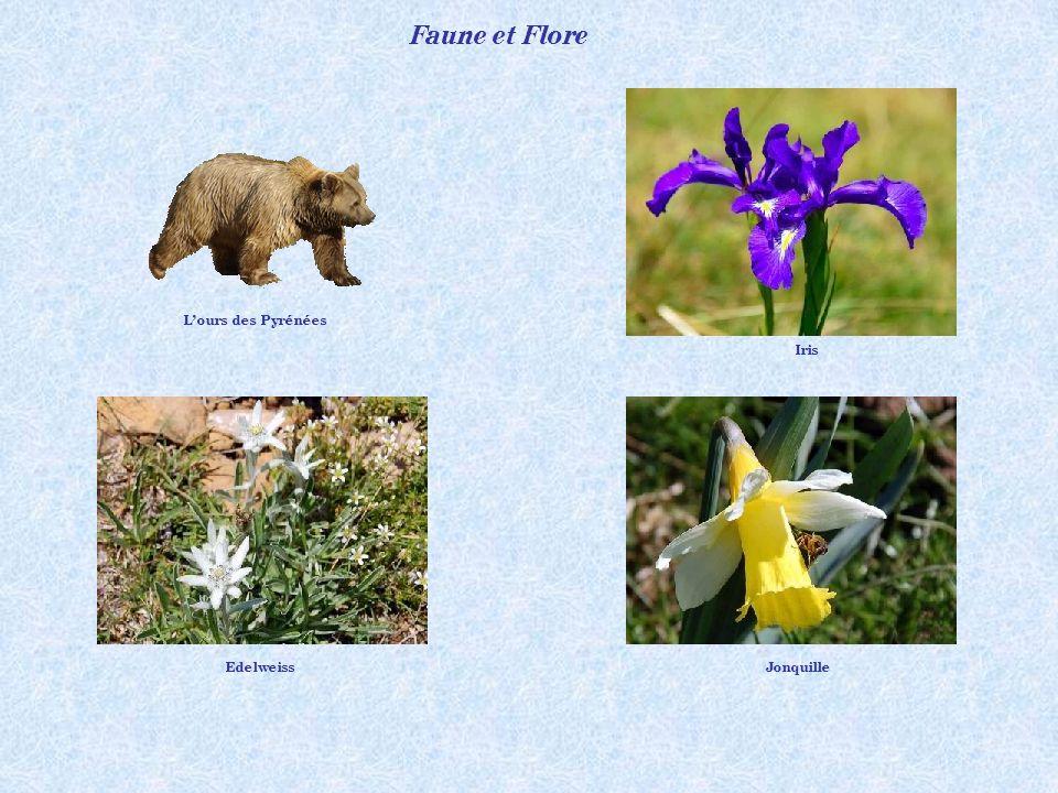 Faune et Flore L'ours des Pyrénées Iris Edelweiss Jonquille