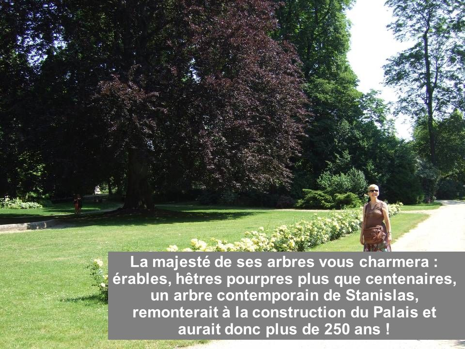 La majesté de ses arbres vous charmera : érables, hêtres pourpres plus que centenaires, un arbre contemporain de Stanislas, remonterait à la construction du Palais et aurait donc plus de 250 ans !