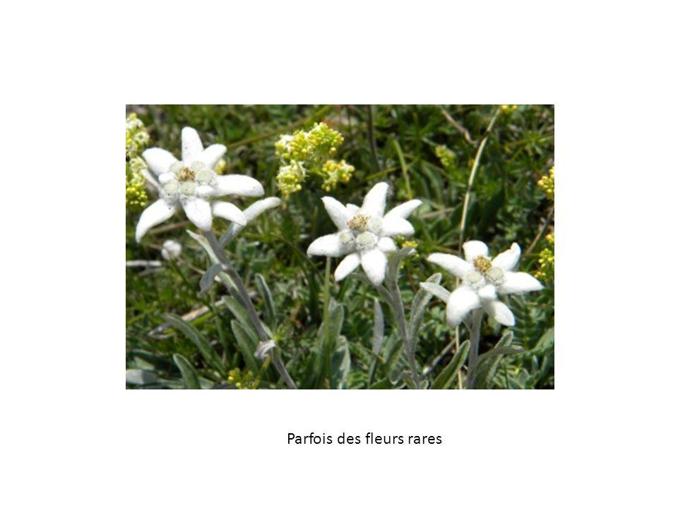 Parfois des fleurs rares