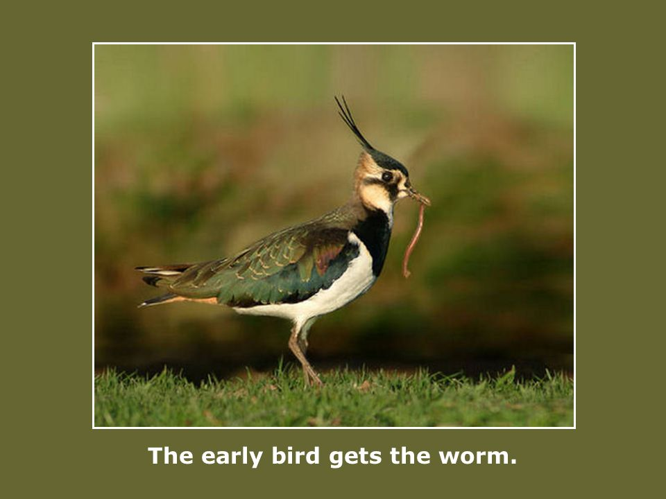 The early bird gets the worm.