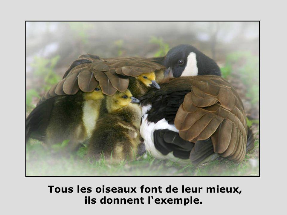 Tous les oiseaux font de leur mieux, ils donnent l'exemple.