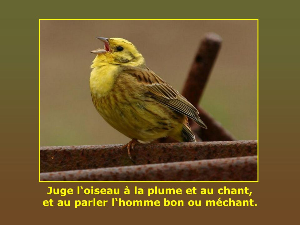Juge l'oiseau à la plume et au chant, et au parler l'homme bon ou méchant.