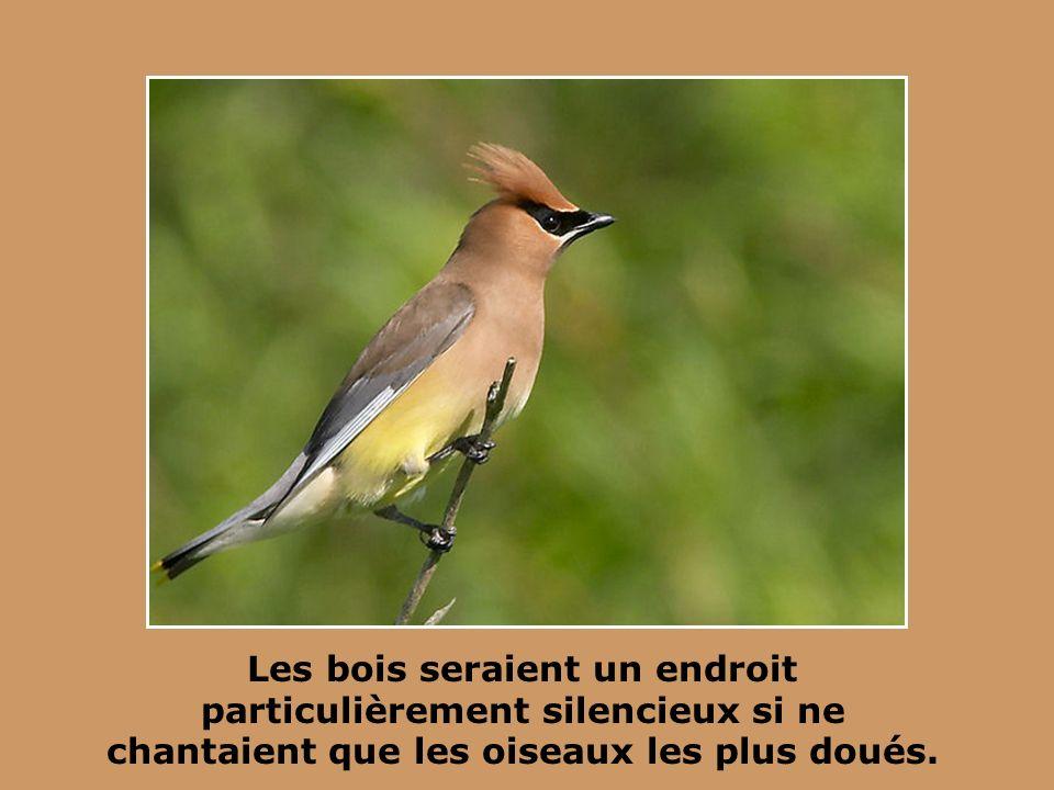 Les bois seraient un endroit particulièrement silencieux si ne chantaient que les oiseaux les plus doués.