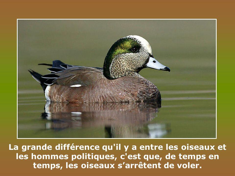La grande différence qu il y a entre les oiseaux et les hommes politiques, c est que, de temps en temps, les oiseaux s'arrêtent de voler.