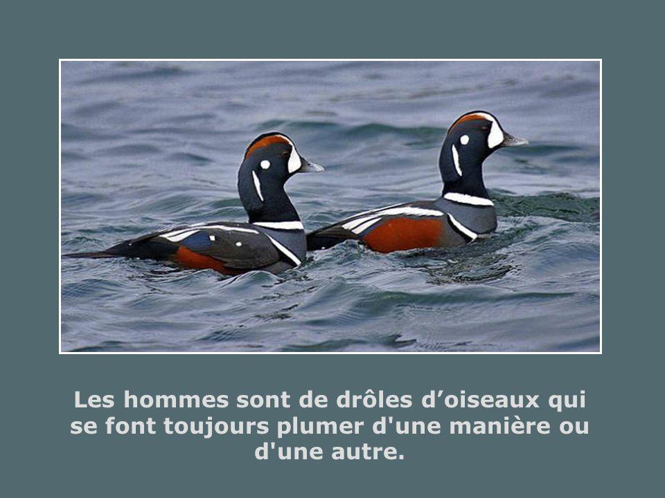 Les hommes sont de drôles d'oiseaux qui se font toujours plumer d une manière ou d une autre.