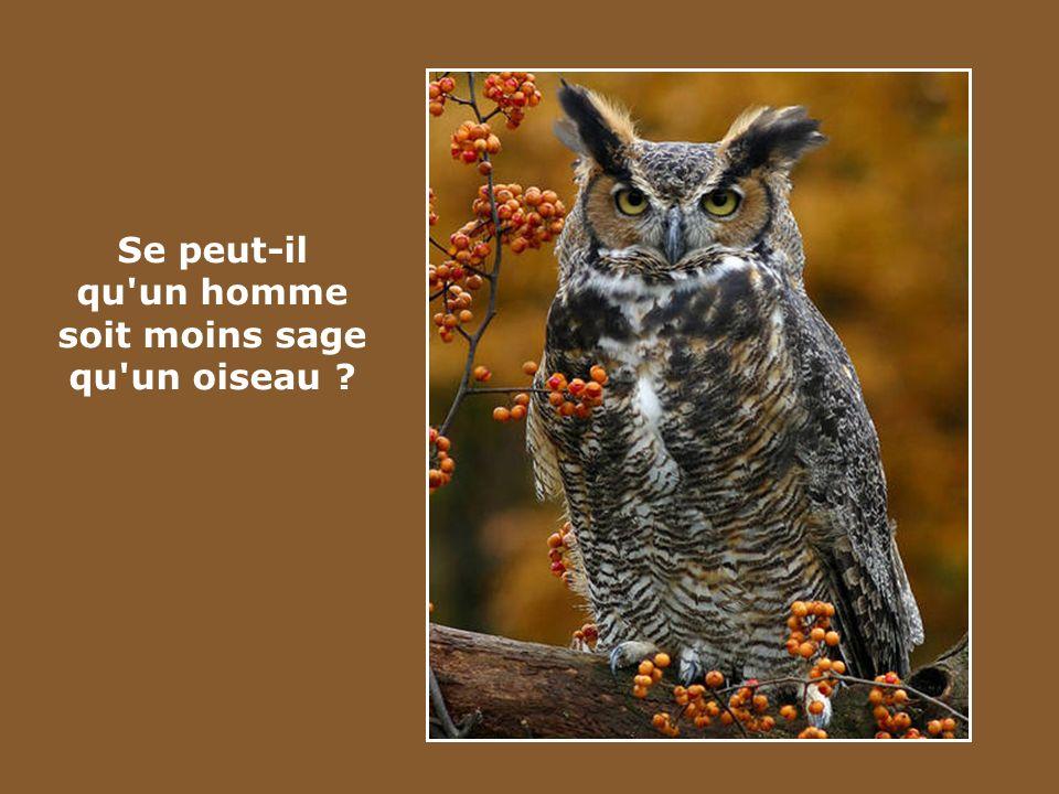 Se peut-il qu un homme soit moins sage qu un oiseau