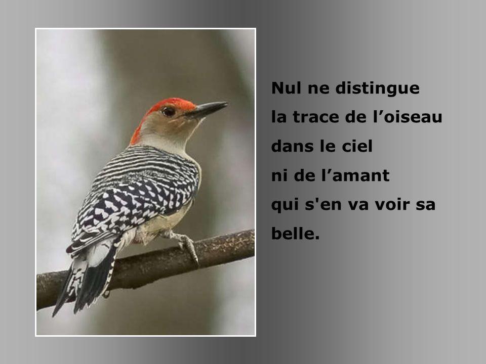Nul ne distingue la trace de l'oiseau dans le ciel ni de l'amant qui s en va voir sa belle.