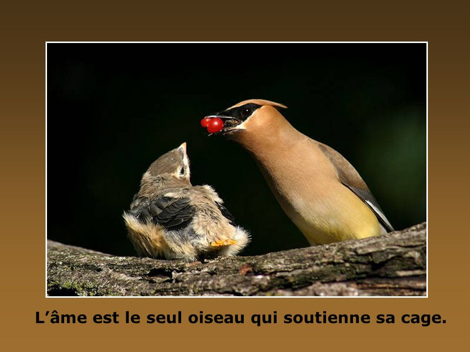 L'âme est le seul oiseau qui soutienne sa cage.