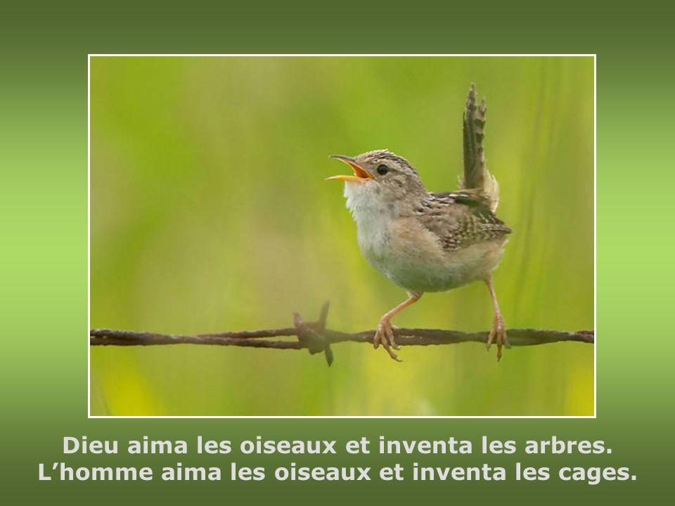 Dieu aima les oiseaux et inventa les arbres