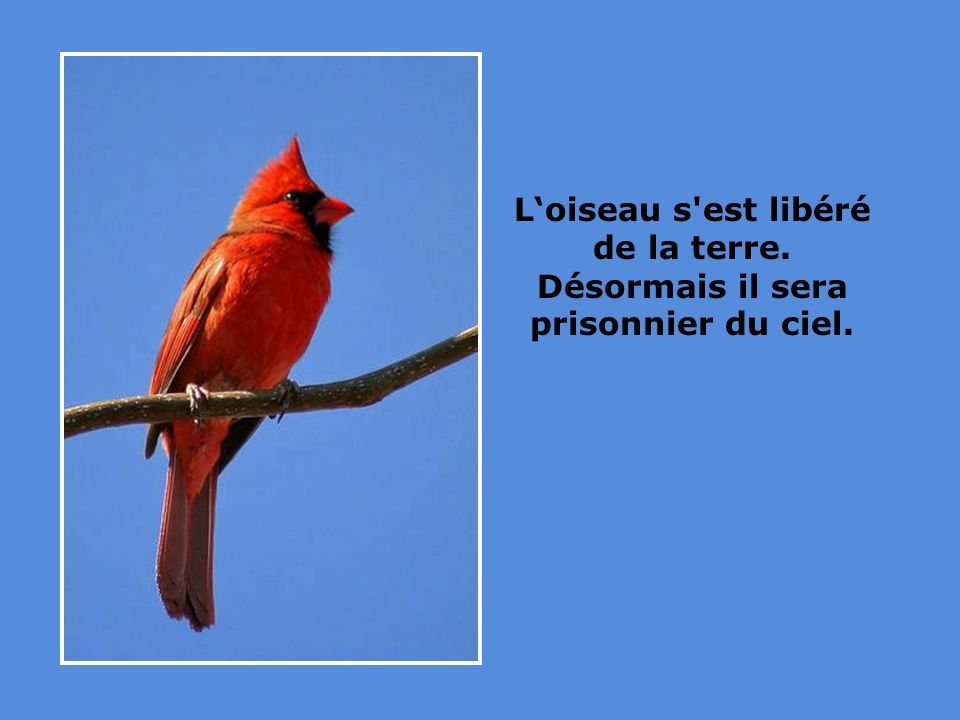 L'oiseau s est libéré de la terre. Désormais il sera prisonnier du ciel.